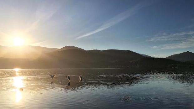 Ducks Loch Morlich