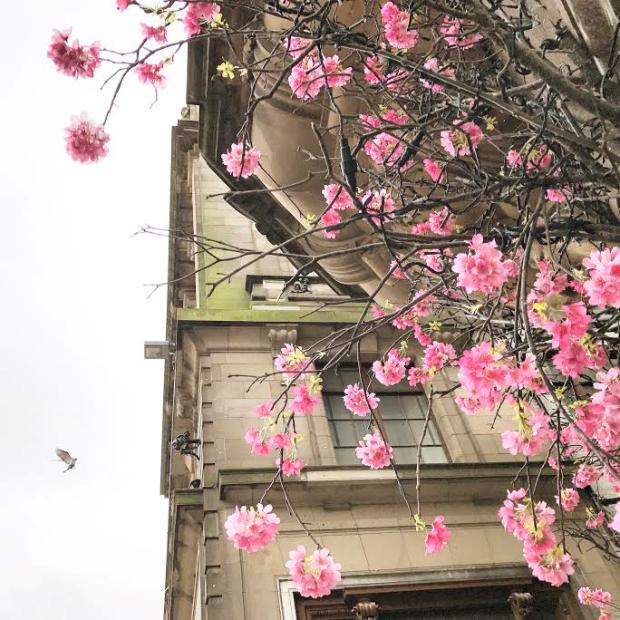 Edinburgh Blossom