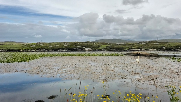 Lily Pond North Uist
