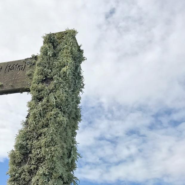 Grassy Signpost.JPG