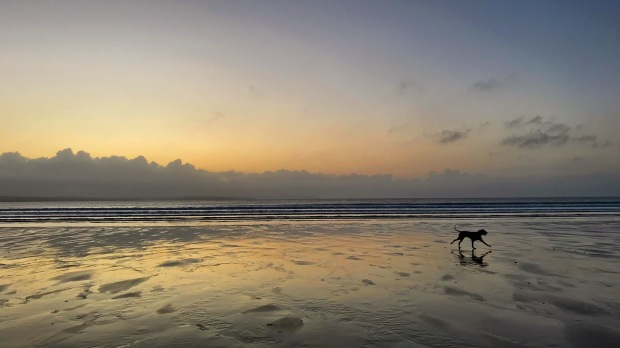 Beach Sunset and Dog .JPG