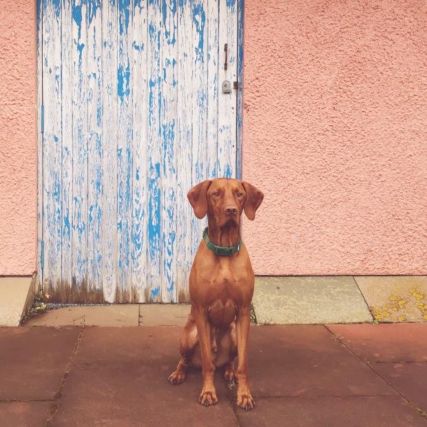 Dearest Dog and Dearest Door.JPG