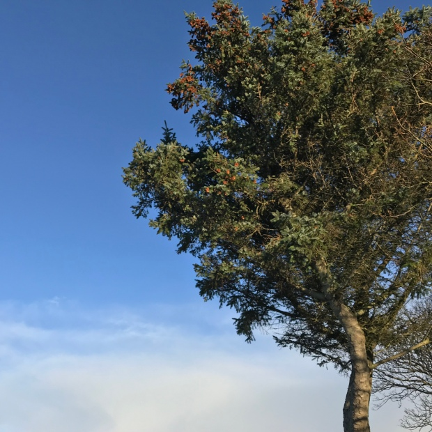 Tree November.jpg