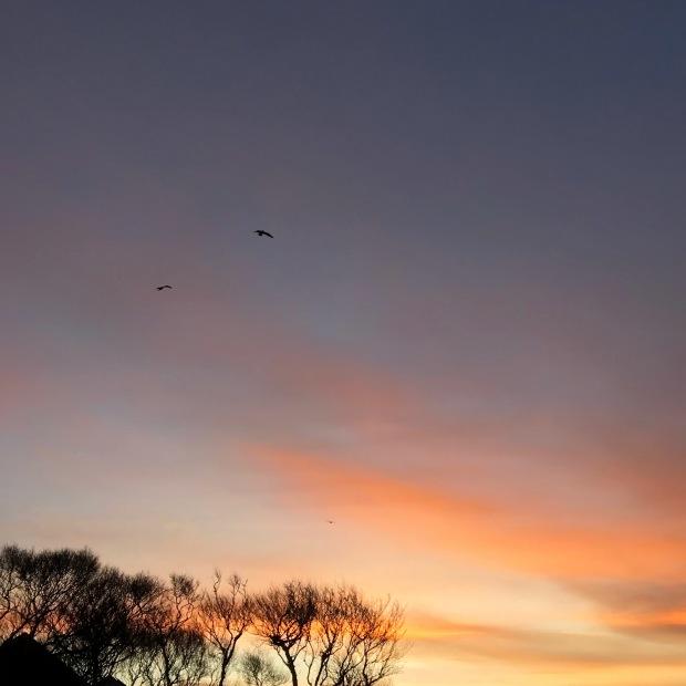 Caithness Sunrise January