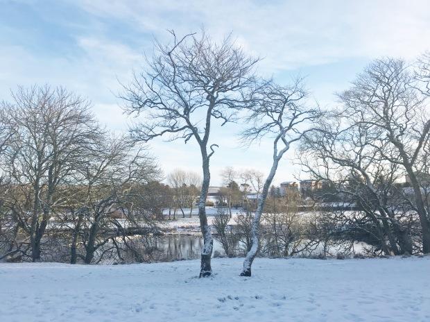 Snowy Scenes Caithness