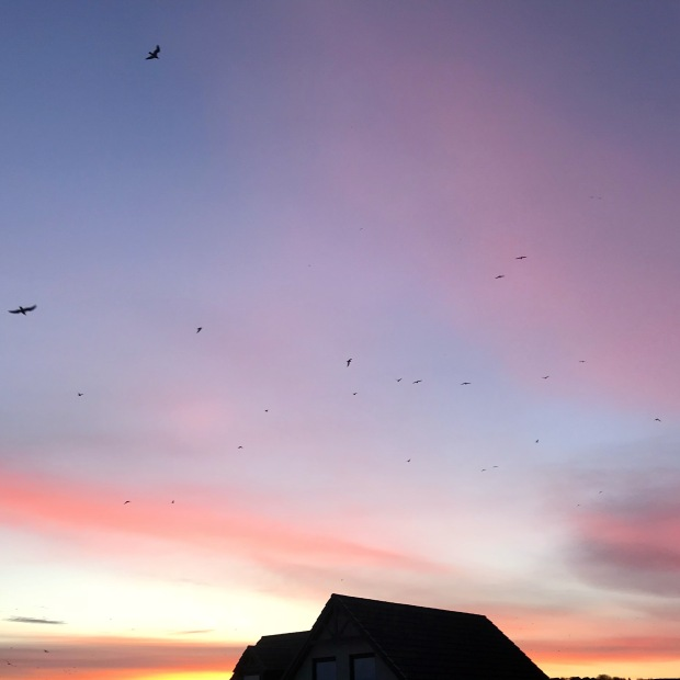 Pink Sky and Birds