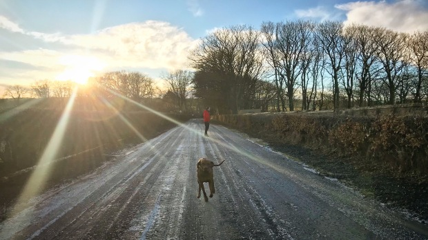 Sunburst Dog Walk