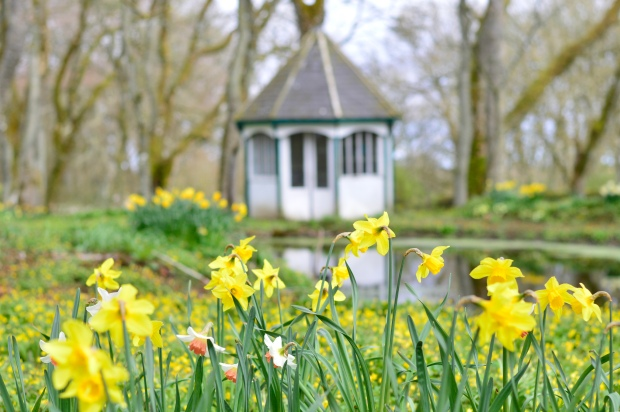 Daffodils Thrumster House